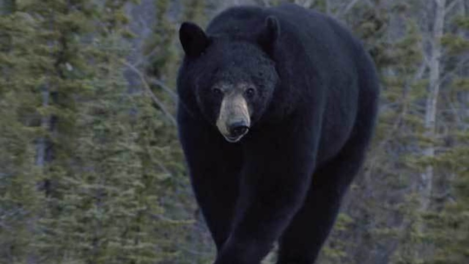Bear found hiding in New Jersey home's crawlspace