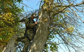 Can't Find a Perfect Treestand Tree?