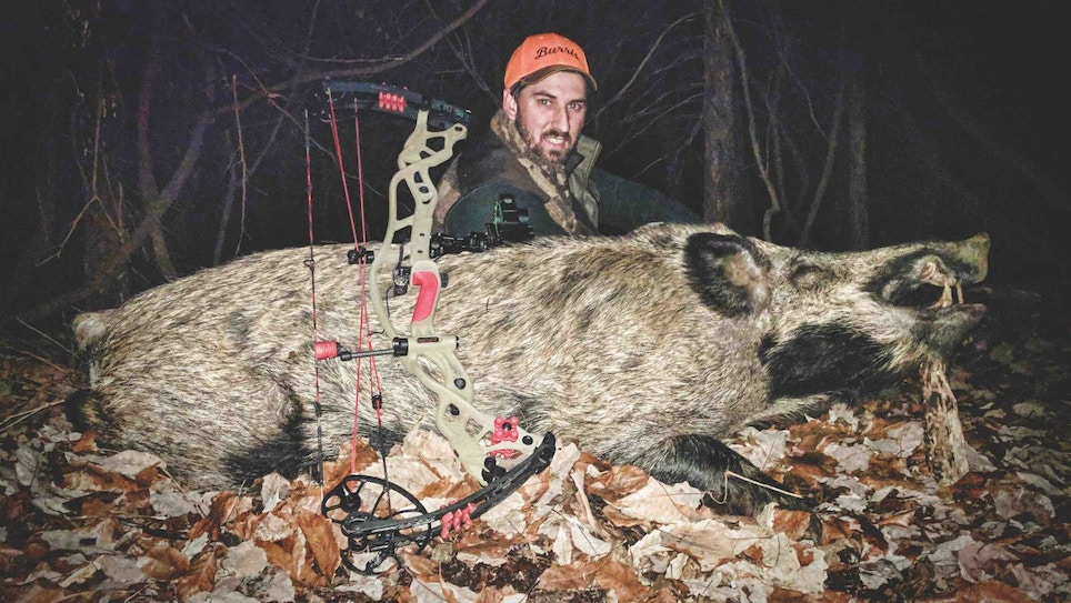 Bowhunting Wild Hogs on Public Land
