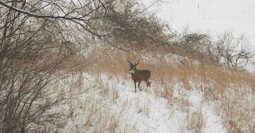 A well-thought-out food plot plan will help you attract mature bucks, drawing them from surrounding properties.