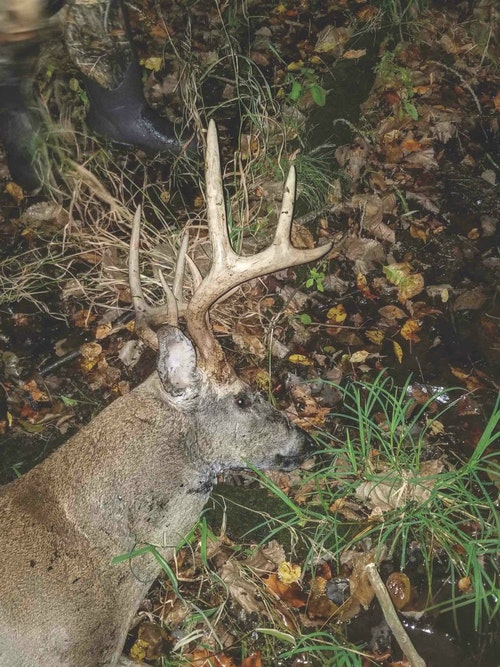 Pictured is the 10-point buck that crossed both hunters' paths, leading to the confrontation.