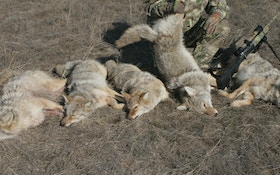 How The Government Competes With Your Predator Hunt