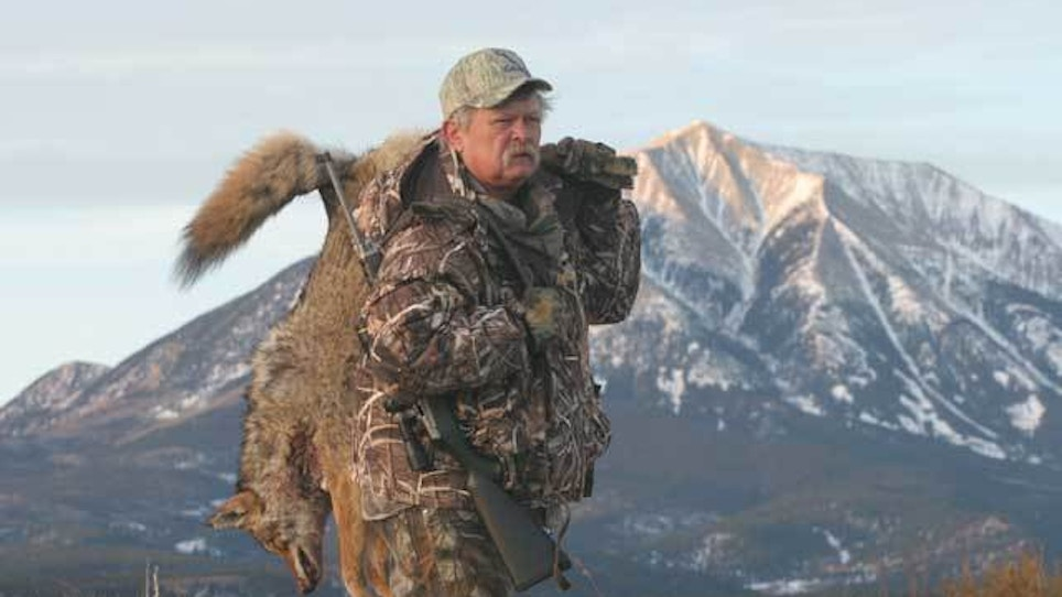 How To Outsmart a Mature Coyote