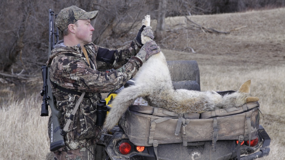 3 places you'll find coyotes while hunting wild game