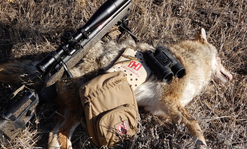 Which Riflescope for Coyotes Is Right for You?