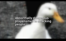 Woman Attacked By Duck Sues Owner For $275,000