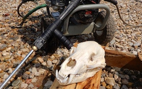 DIY Project: How to Create European Mounts of Predator Skulls