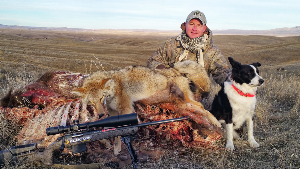 5 Natural Bait Tips for More Coyote Hunting Success