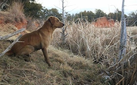 10 Best Hunting Dog Names