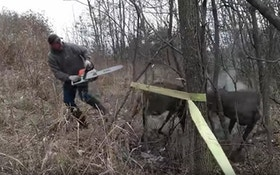 Must-See Video: Chainsaw Used to Free Locked Whitetail Bucks