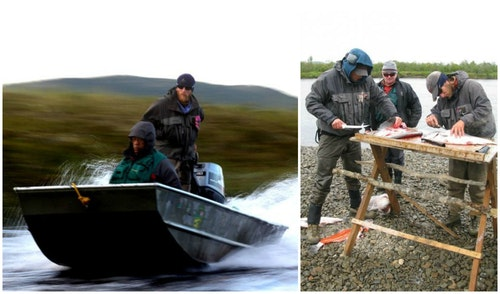 Running rivers in Alaska is safer for clients when the guide stands in the stern to look for obstacles. Having a live salmon kicking at the guide's feet is a recipe for disaster, so killing each kept fish is mandatory. Bleeding fish results in blood-free fillets. (Photos from Bristol Bay Lodge Facebook.)