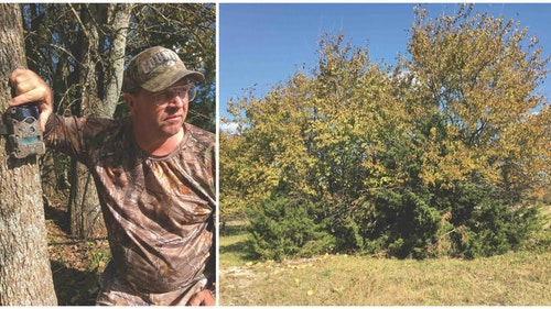 One week before the author's arrival in Kansas, Wicked Outfitters guide Pat Boone (left) placed a scouting cam to capture pics of a particular heavy-racked buck. When it comes to brushing in a pop-up ground blind, Boone is the master. The right photo shows what the whitetails saw when looking toward the author's ambush.