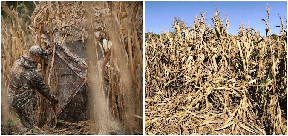 Depending on the scenario, you can maximize concealment by brushing in a blind. As these photos show, hiding a blind in a standing cornfield is limited only by your imagination and amount of effort.