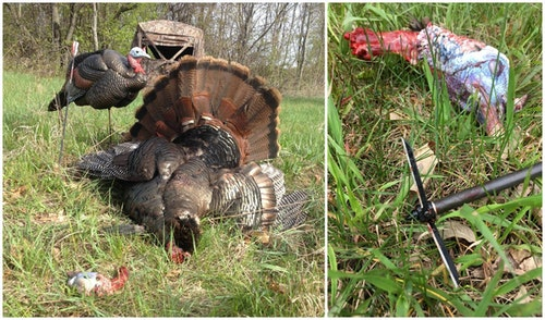 When hiding in a ground blind with black interior, the author prefers a Magnus Bullhead matched with a Victory arrow. The combo is deadly for head/neck shots on turkeys.