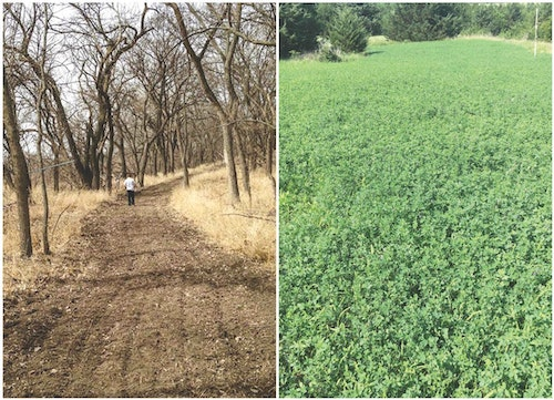 Mowed, sprayed and manicured trails connecting blocks of bedding timber create a travel corridor deer will use throughout the year. Secluded green plots that deer can access easily before heading toward large ag fields can boost the chance of a buck encounter.