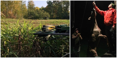 The author tagged this Wisconsin doe on Sept. 19, 2020, from the green-field ambush seen in the left photo. His dad and nephew checked the deer's field-dressed weight — 108 pounds.