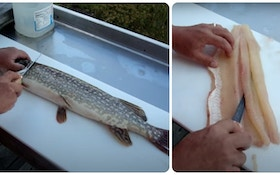 Video: How to Remove Y-Bones From Northern Pike