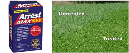 As shown above, you can control grasses in a clover plot by treating it with a grass-specific herbicide.
