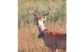 "Hunters should avoid harvesting ""Collared Deer"" in research locations"