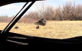 VIDEO: Colorado Turkey Meets Rage Xtreme Broadhead
