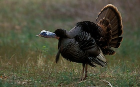 Arrowed a Gobbler? Stay Put!
