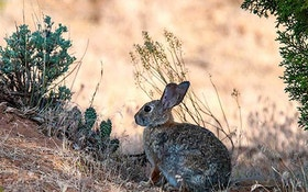 Deadly Hemorrhagic Disease Confirmed in Wild Rabbits