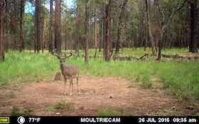 Coues Whitetail Journal: A Win for Arizona