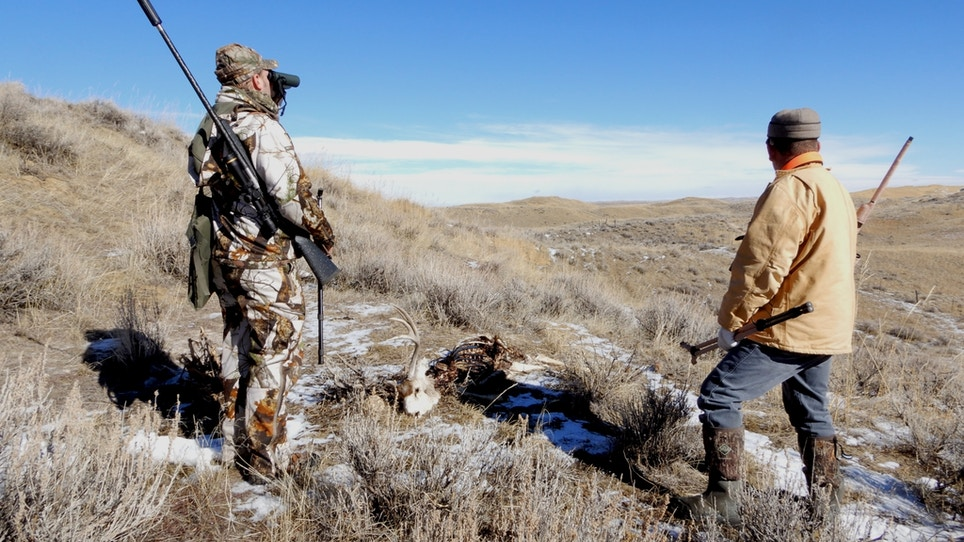 Coyote country can be a rough, cruel world