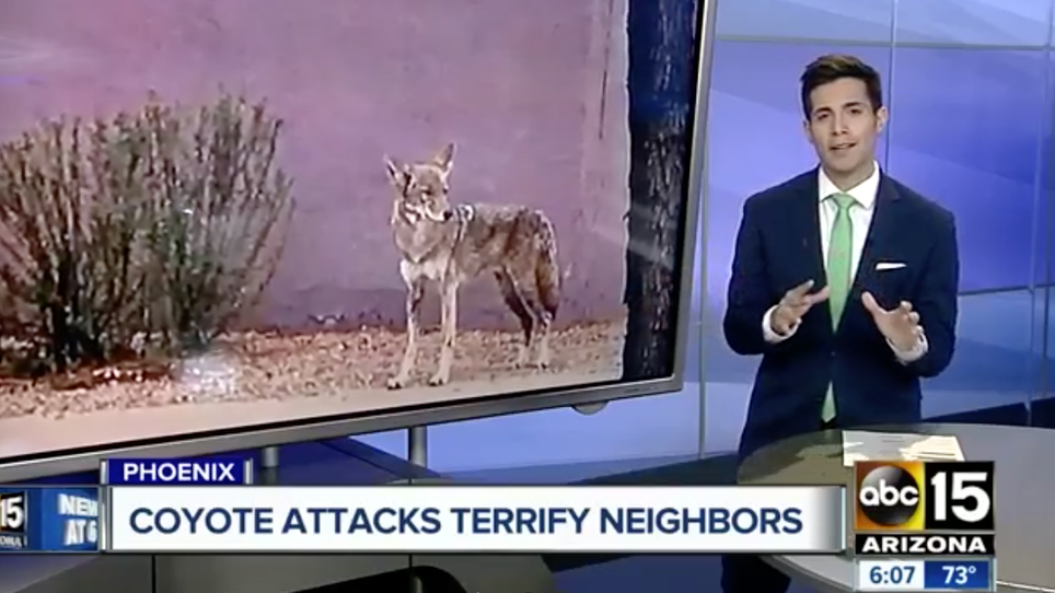 What's Going on With All These Coyote Attacks?