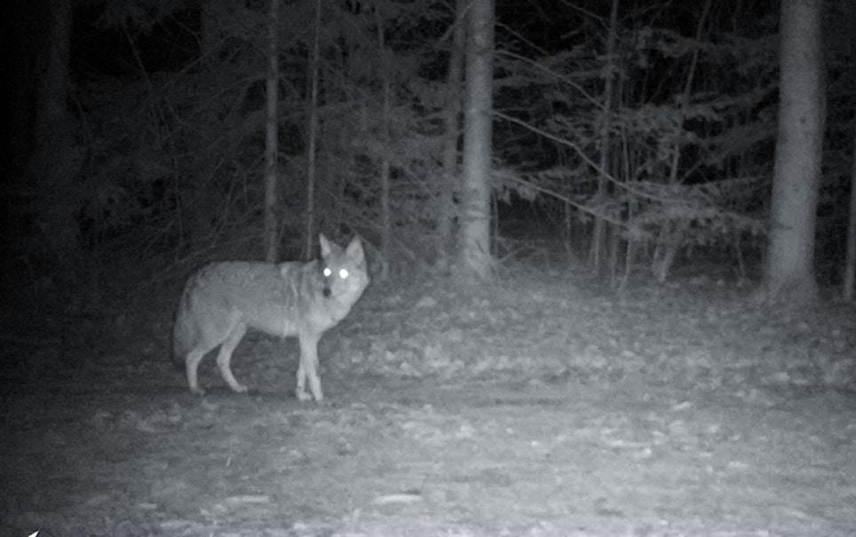 Alabama Goes Nocturnal on Predators
