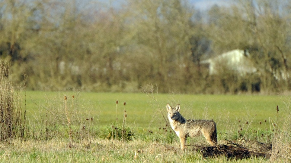 Predators at long ranges: are they boon or boondoggle?