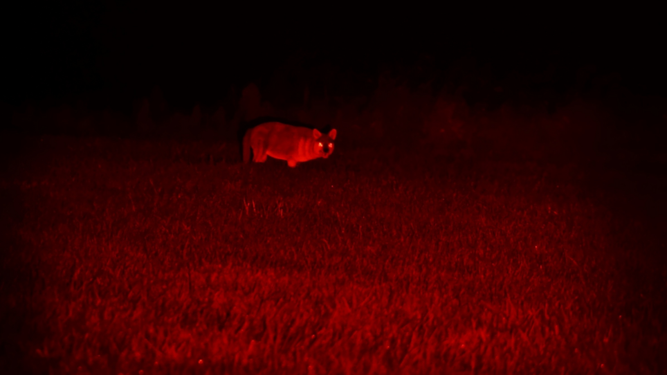 GSM Acquires CoyoteLight to Expand Predator-Hunting Lineup