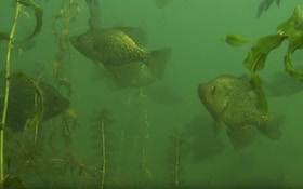Video: Finding and Catching Pre-Spawn Crappies