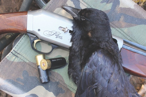 Crows are large birds, and while regular dove loads can be used, high-based No. 4s and 6s will extend your shotgun's range.