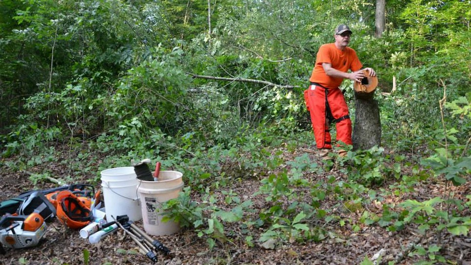 Deer Hunters: 3 Affordable and Beneficial Habitat Improvements