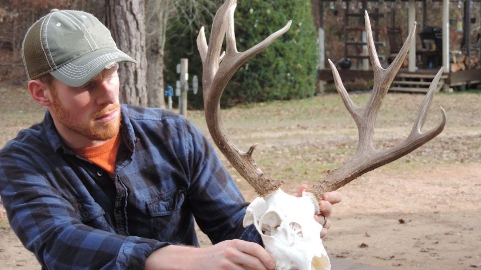6 Easy Steps to a DIY European Skull Mount