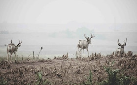 Treestand Tactics for Mule Deer