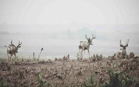 Treestand Tactics for Mule Deer