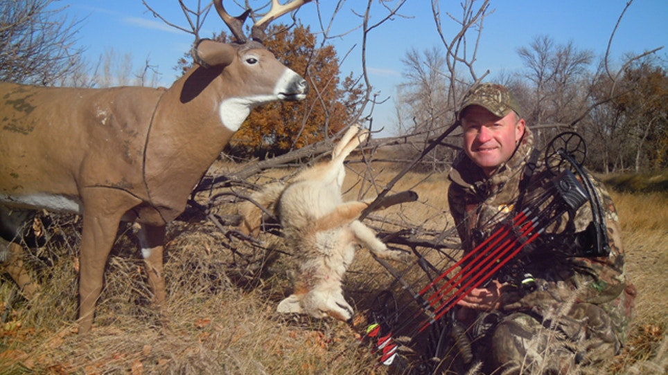 Stay alert when using coyote decoys
