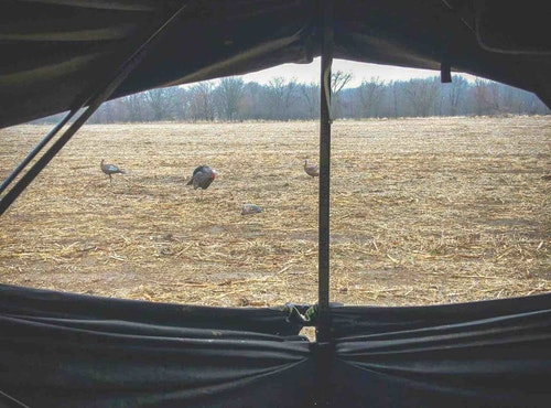 With their decoys reset in front of the blind, the bowhunters waited. Finally, several hens, gobblers in tow, approached their ambush.
