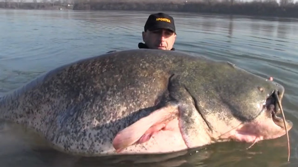 VIDEO: That's One Huge Catfish...Seriously