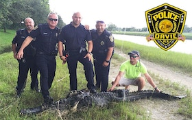 Video: 450-Pound Gator Caught Near Florida Schools