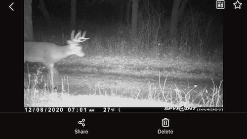 Curious if a particular buck made it through the gun season? A trail cam pic can provide proof, and give incentive to keep bowhunting hard until the very end.