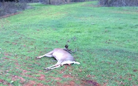 The Life Of A Bowhunter In Deer Season: Day 13