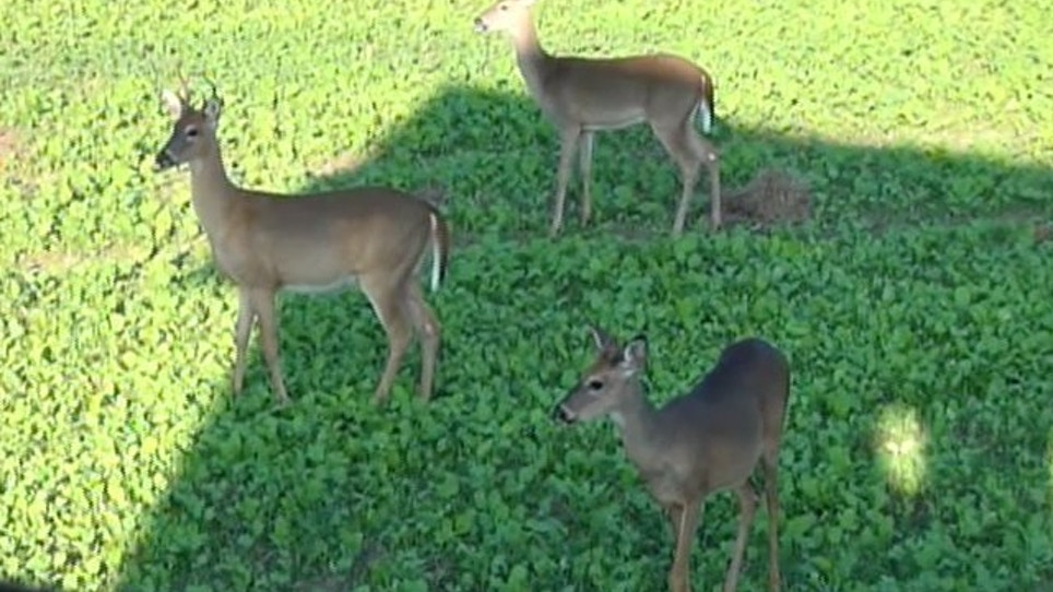 Number of Illinois deer hunted down from 2012