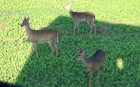 Hunters kill 110K deer during Wisconsin opening weekend