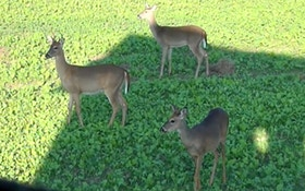 750,000 Pennsylvania hunters open 2-week rifle deer season