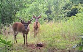North Dakota Deer Hunting Licenses Lowest Since 1978