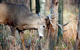 14 Things You Didn't Know About Buck Rubs