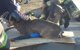 Deer Rescued From Water Tank In New Jersey